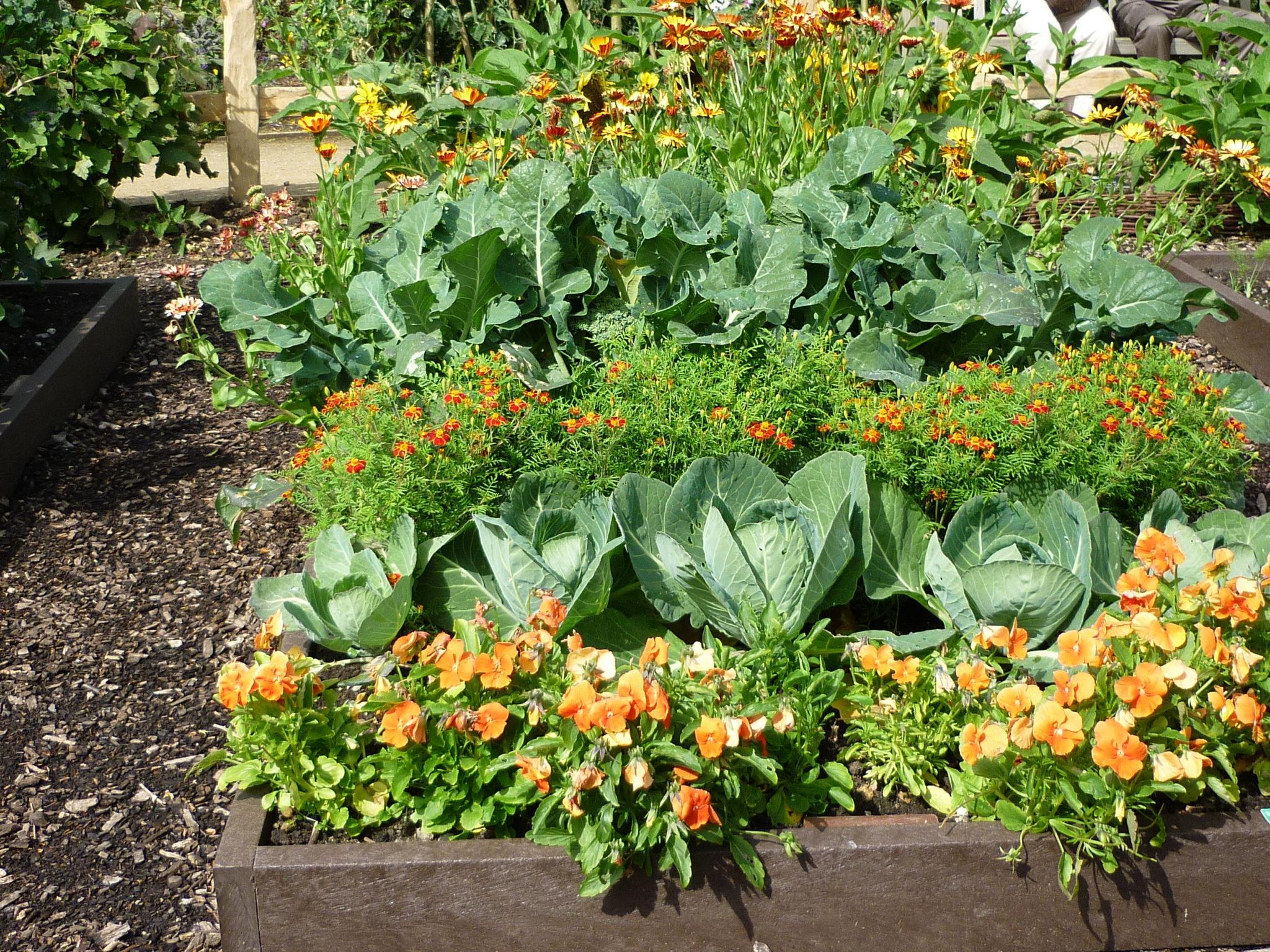 Соседство овощей на грядках: что с чем можно сажать 15