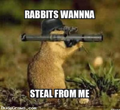Pesky Rabbits